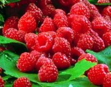 Малина є лідером серед органічних ягід в Україні