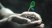 Los Grow shop online y su nuevo modelo de negocio
