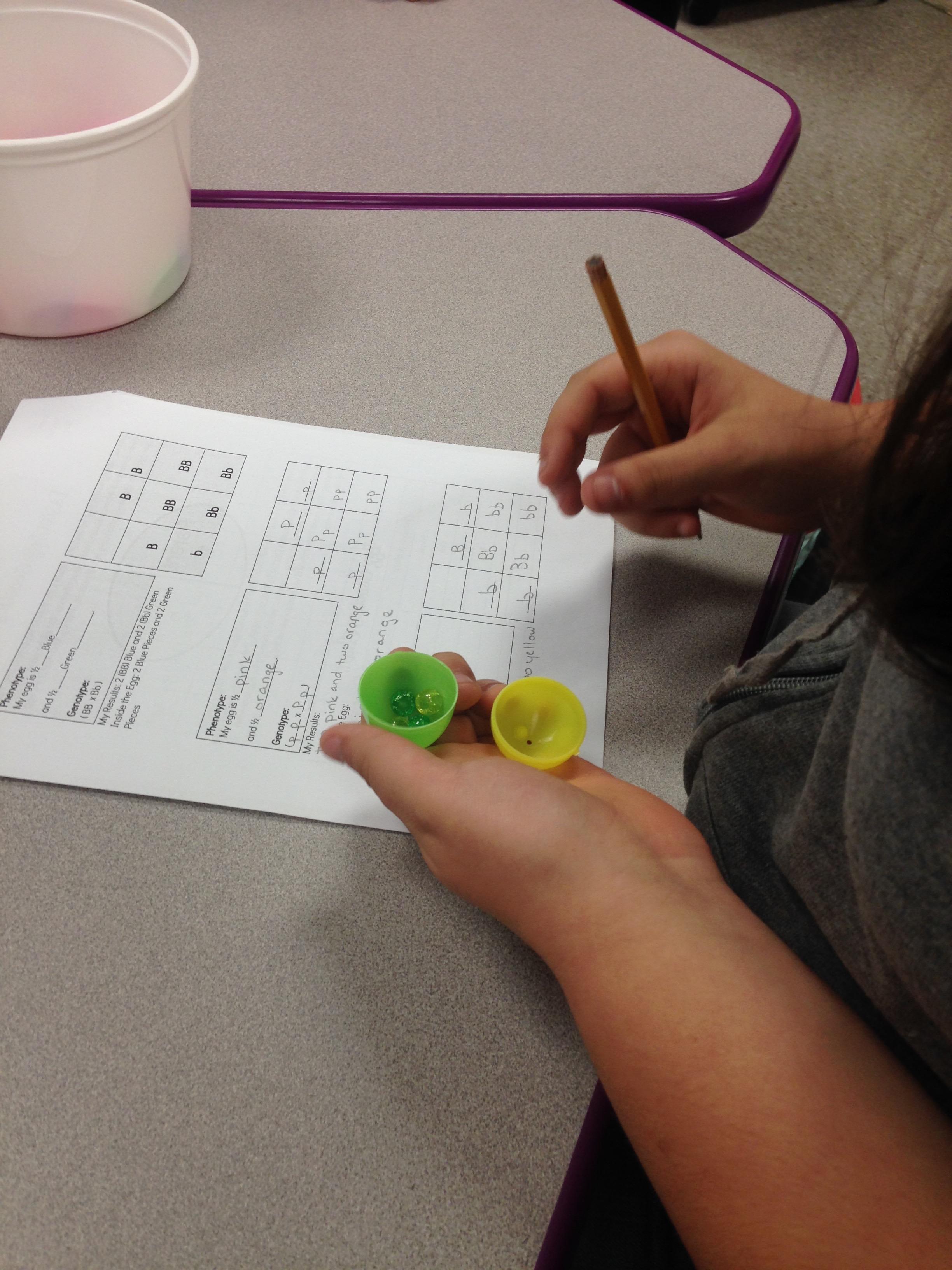 Stem Lesson Easter Egg Genetics