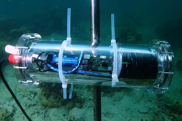 Intel, salvare la barriera corallina si può con l'AI