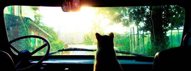 Cat in Car facebook Cover