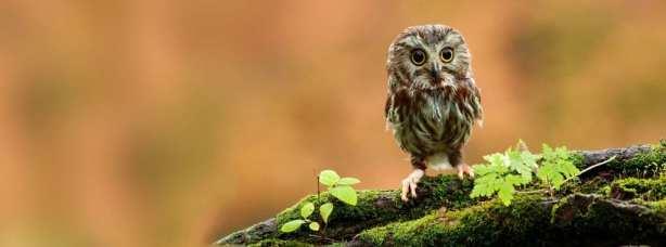Owl facebook cover