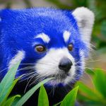 Firefox takes a Quantum leap forward with new developer edition