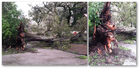 130812 Tree Down on Broadway Collage