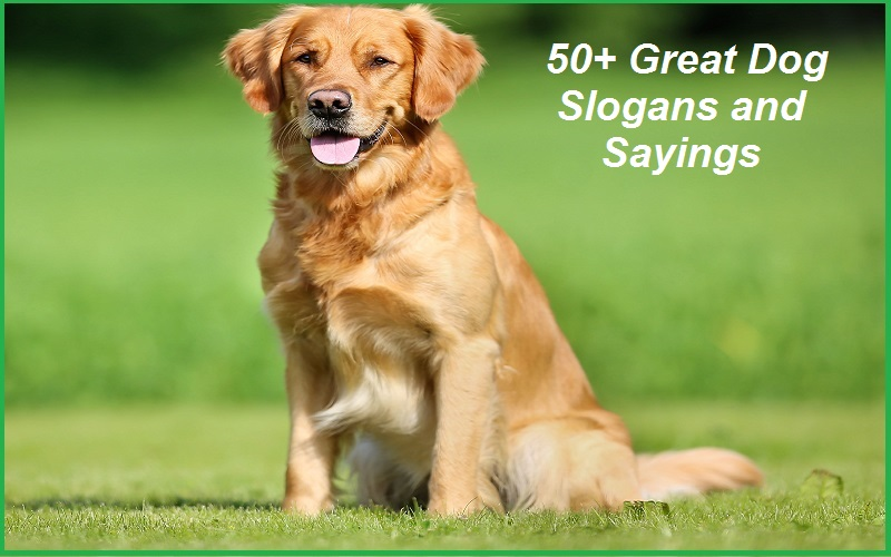 Famous Dog Slogans, Taglines And Sayings