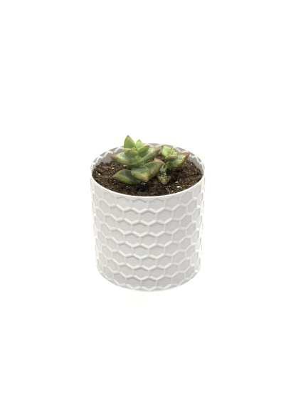 Honey Pot Vase Angle