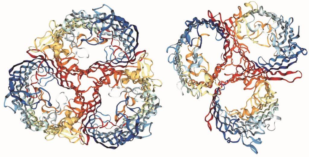 receptors_281280x65329-1024x522