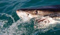 Αν προγραμματίζετε διακοπές σε… επικίνδυνες θάλασσες, να τι χρειάζεστε