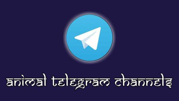 Top Collections of 20 Best Animal Telegram Channels List, Pet Animal Telegram Channels