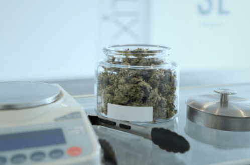 Passing Marijuana Drug Tests! How Much Pee Is Needed for A