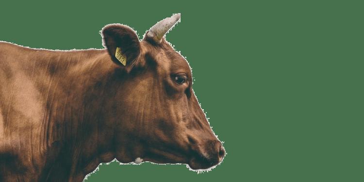 Livestock tracking - Anitrack