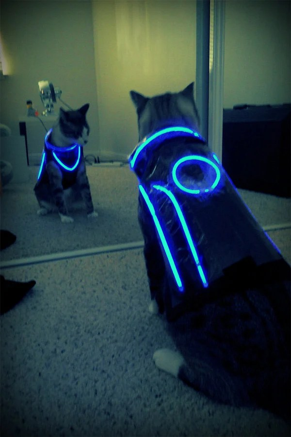 tron cat costume lights diy