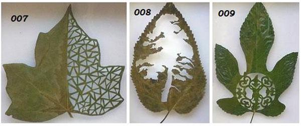leaf-art-maple