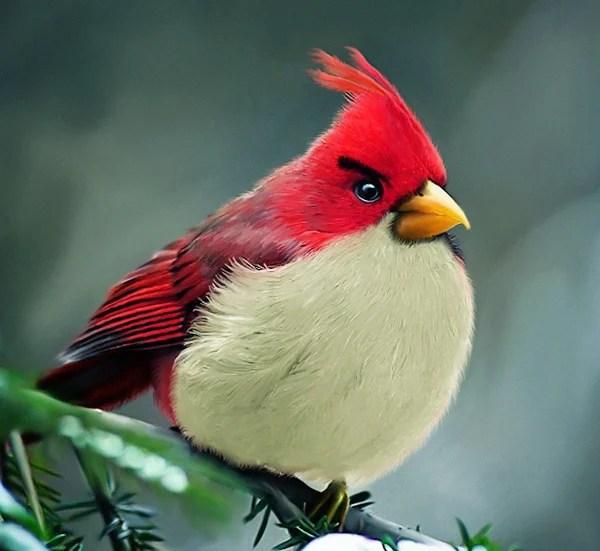 mohamed raoof irl angry birds design geek art