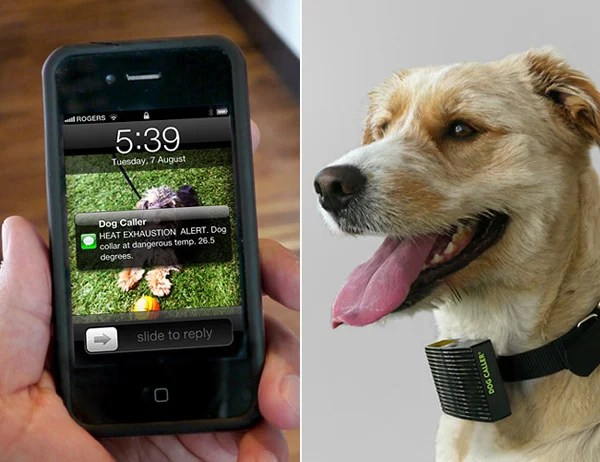 rethink toronto dog caller heat sensing collar