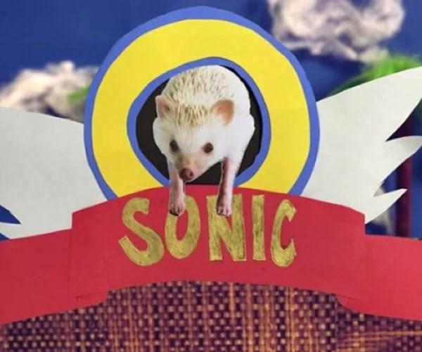 Sonic Hedgehog Real Name