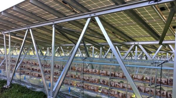 농업이 가능한 태양광 발전소