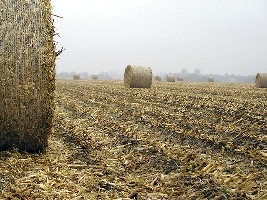 Corn stover in bales (ARS/USDA)