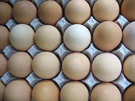 Eggs (Melissa Sanders/Flickr)