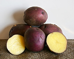 Peter Wilcox potato (University of Florida/Agricultural Research Service)