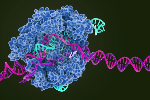 Crispr-Cas9 illustration