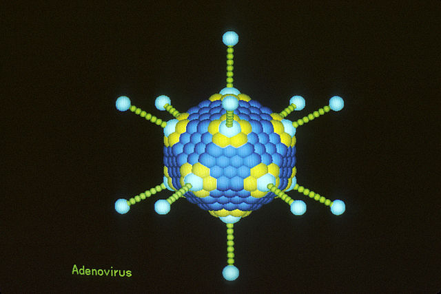 Adenovirus illustration
