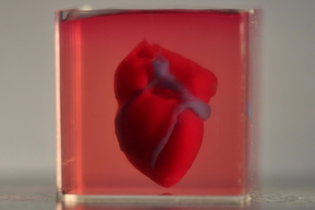 3-D printed heart