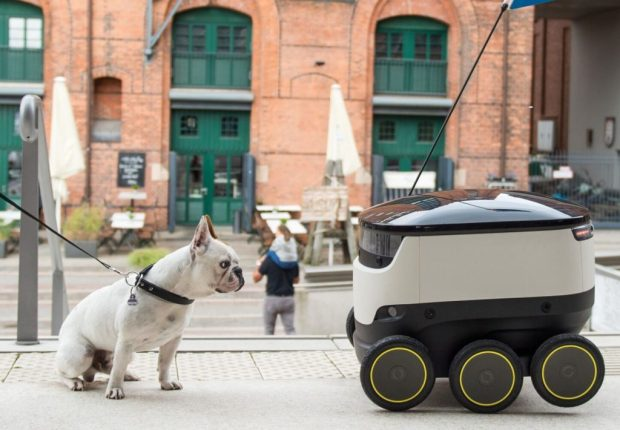 A dog carefully observes a food delivery bot in Germany