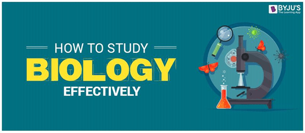 How to Study Biology Effectively