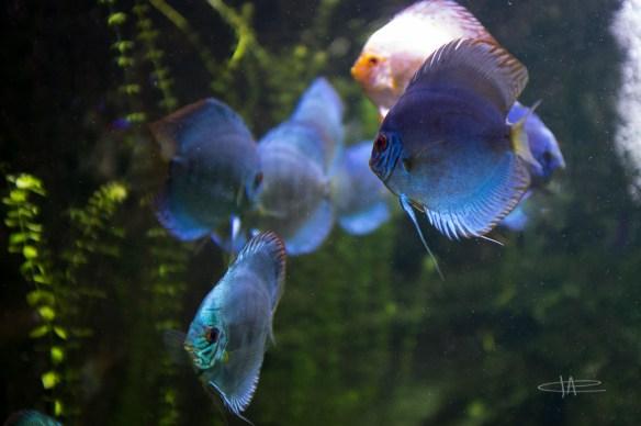 6- Aquarium -23 mm1-60 s à f - 2,0161833