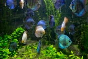 14- Aquarium -23 mm1-60 s à f - 3,2164928