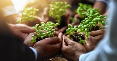 ekologia / neutralność węglowa