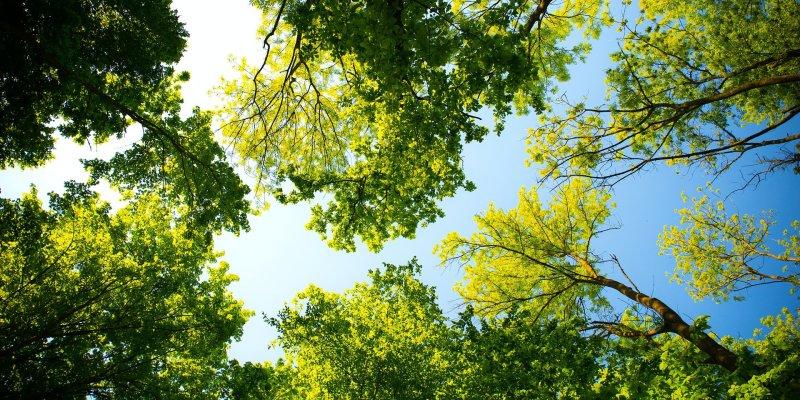 Milion drzew