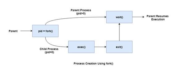 process creation using fork