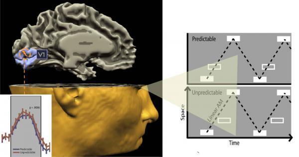 Brain naturally follows scientific method