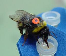 bees-complex-math