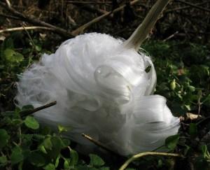 frost flower 3