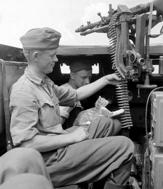 German Soldiers with kitten 1942