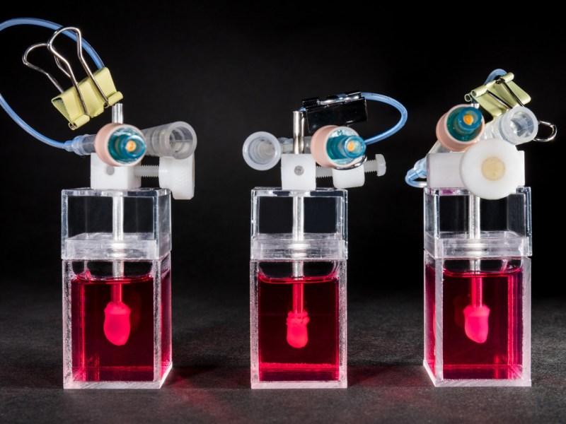 Novoheart miniature hearts testing