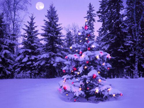 christmas-tree-wallpaper