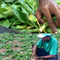 A Rural Story: Value Chain approach for developing sustainable profitable market linkages