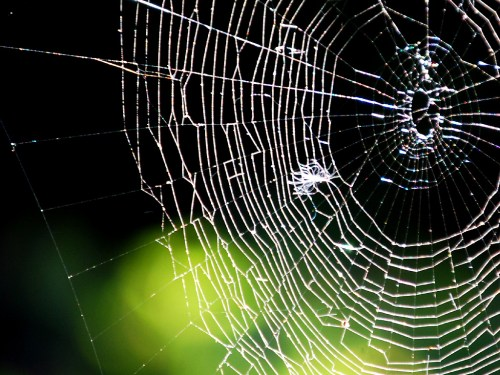 Spider Web by Daniel Orth CC BY-ND 2.0