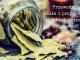 przyprawy zioła dania