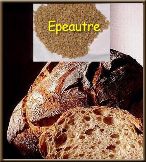 Une image contenant alimentation Description générée avec un niveau de confiance élevé