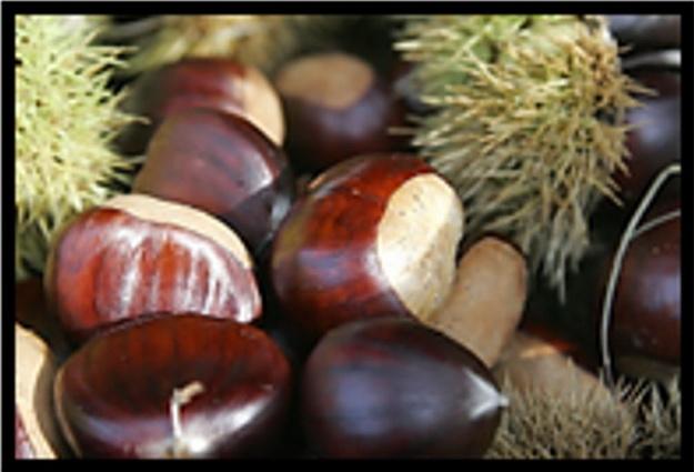 Une image contenant intérieur, fruit, marronnier, noix Description générée automatiquement