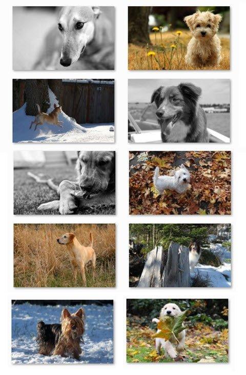 Dogs in Winter Free Windows 7 Theme
