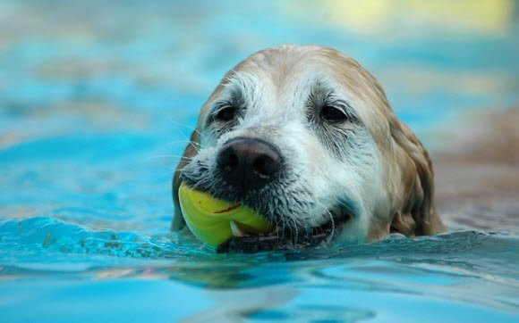 Free Download Dogs in Summer Windows 7 theme Dog's Water Play
