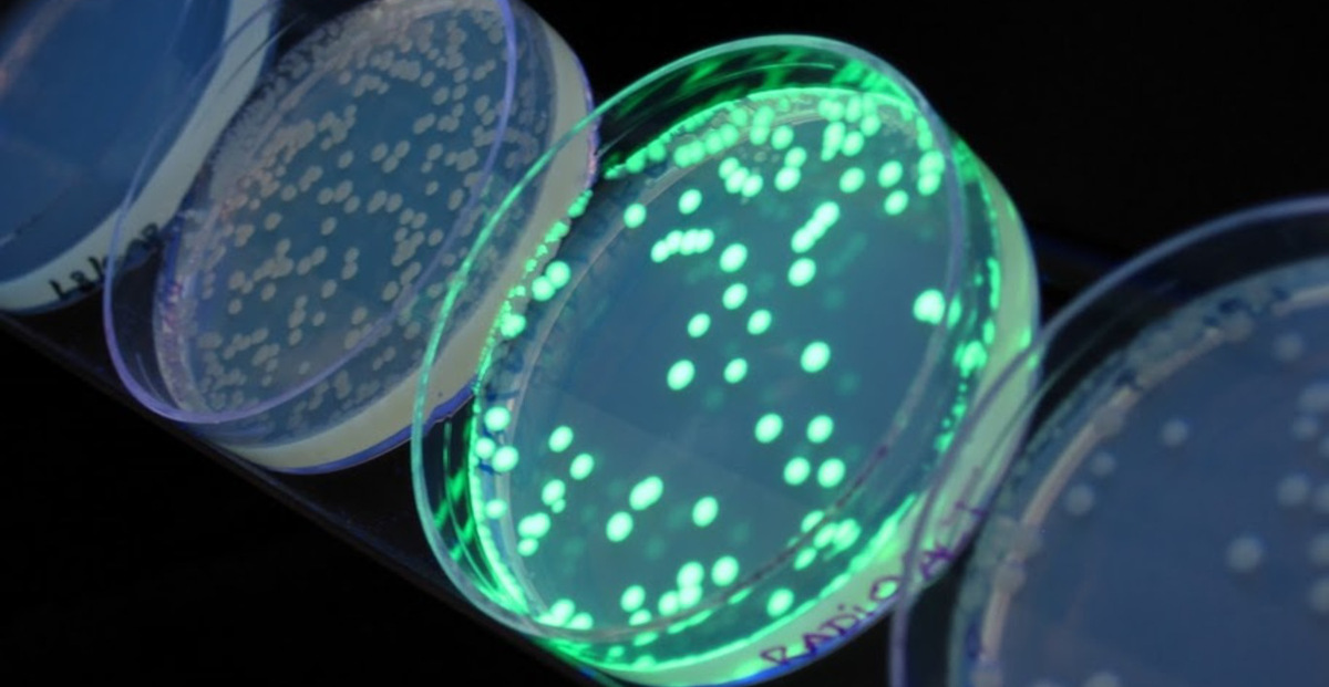 gfp research paper Le12 9np uk biostatus green fluorescent protein research papers develops and offers novel reagents for use in cell-based research, drug screening and healthcare.
