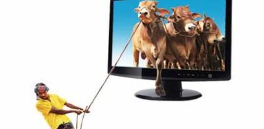 Ahead of Eid ul-Adha, animal market goes online in Bangladesh