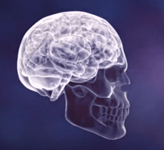 How Kernel Flow Works with Brain (Human brain)